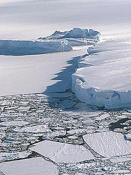 Sea Ice & Iceberg - by Jen Winter